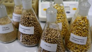 China Approves Imports Of Five Genetically Modified Crops, First In 18 Months